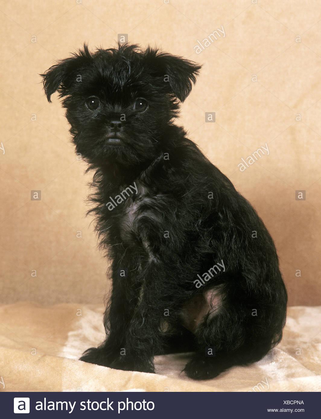 Monkey Dog Stock Photos & Monkey Dog Stock Images - Alamy