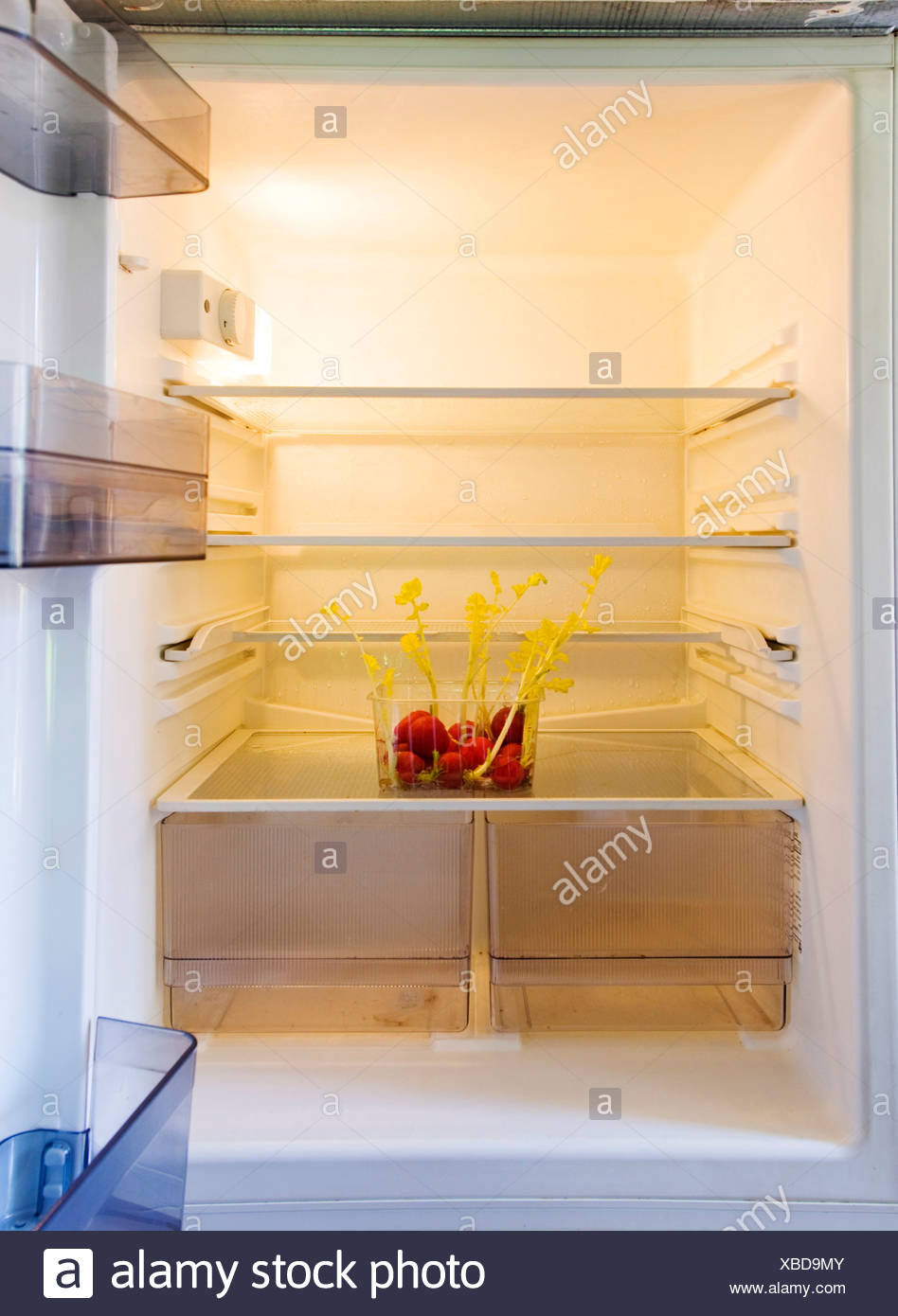 Empty fridge with radishes in a plastic box, yellow germ buds already sprouting - Stock Image