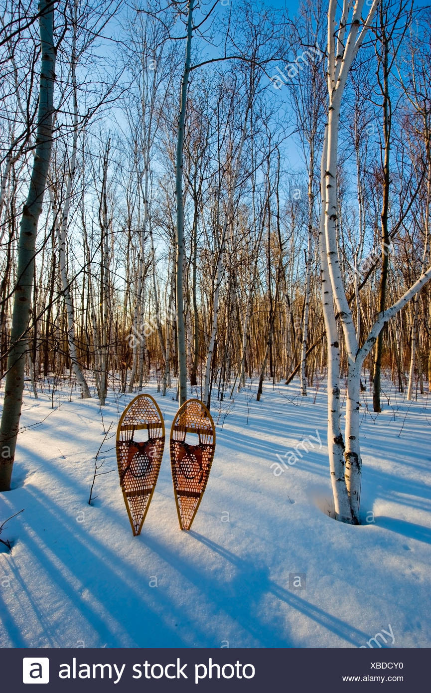 Birch (Betula papyrifera) forest and snowshoes in early spring, Mount Nemo Conservation Area near Burlington, Ontario, Canada - Stock Image