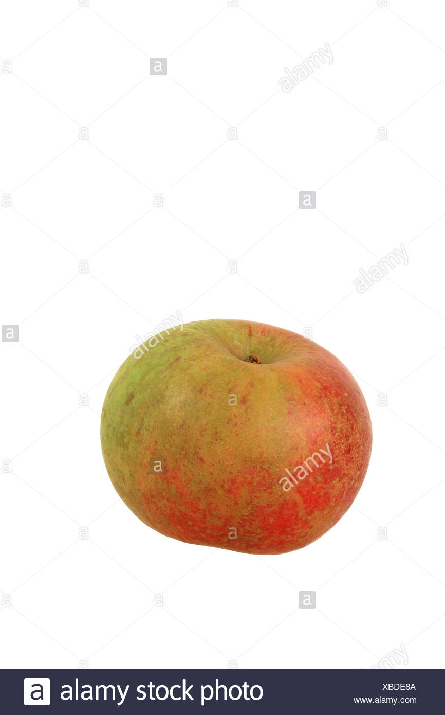 Apple (Malus domestica), Celler Dickstiel variety - Stock Image
