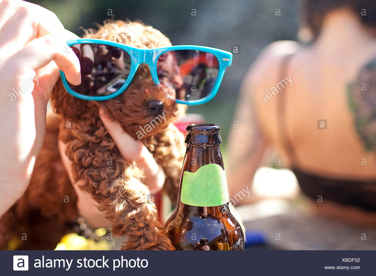 A puppy in sunglasses. - Stock Image