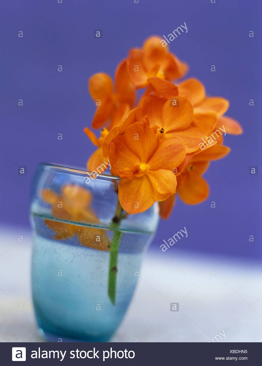 Orange orchids - Stock Image