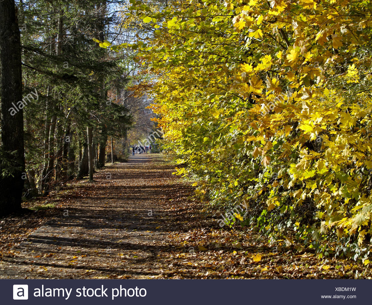 Baum, Baeume, Herbst, Herbstlaub, Blaetter, Farbe, Gelb, Gruen, Jahreszeiten, Natur, Landschaft, Stimmung, Ruhe, Stille - Stock Image