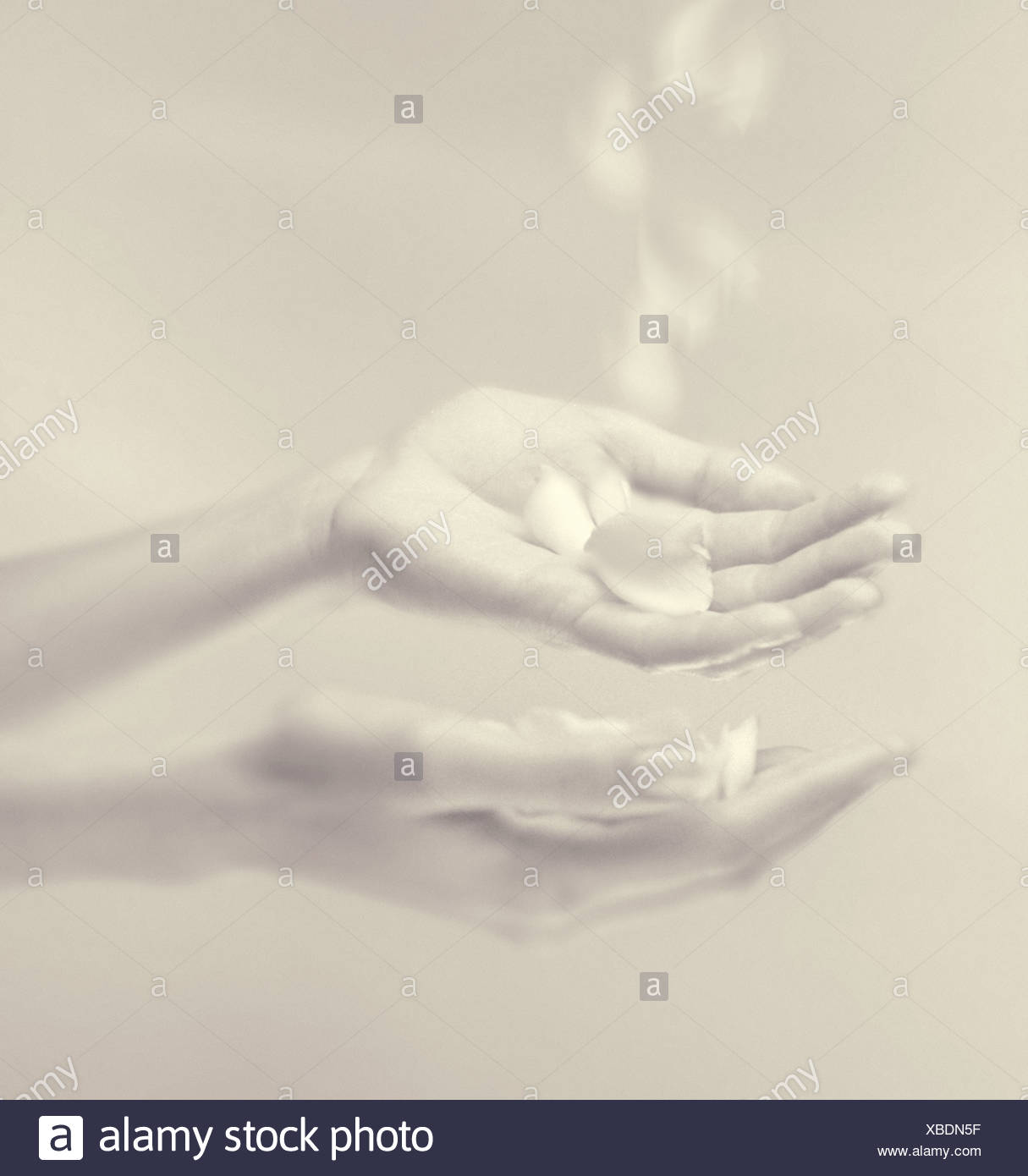 Hands and falling petals - Stock Image