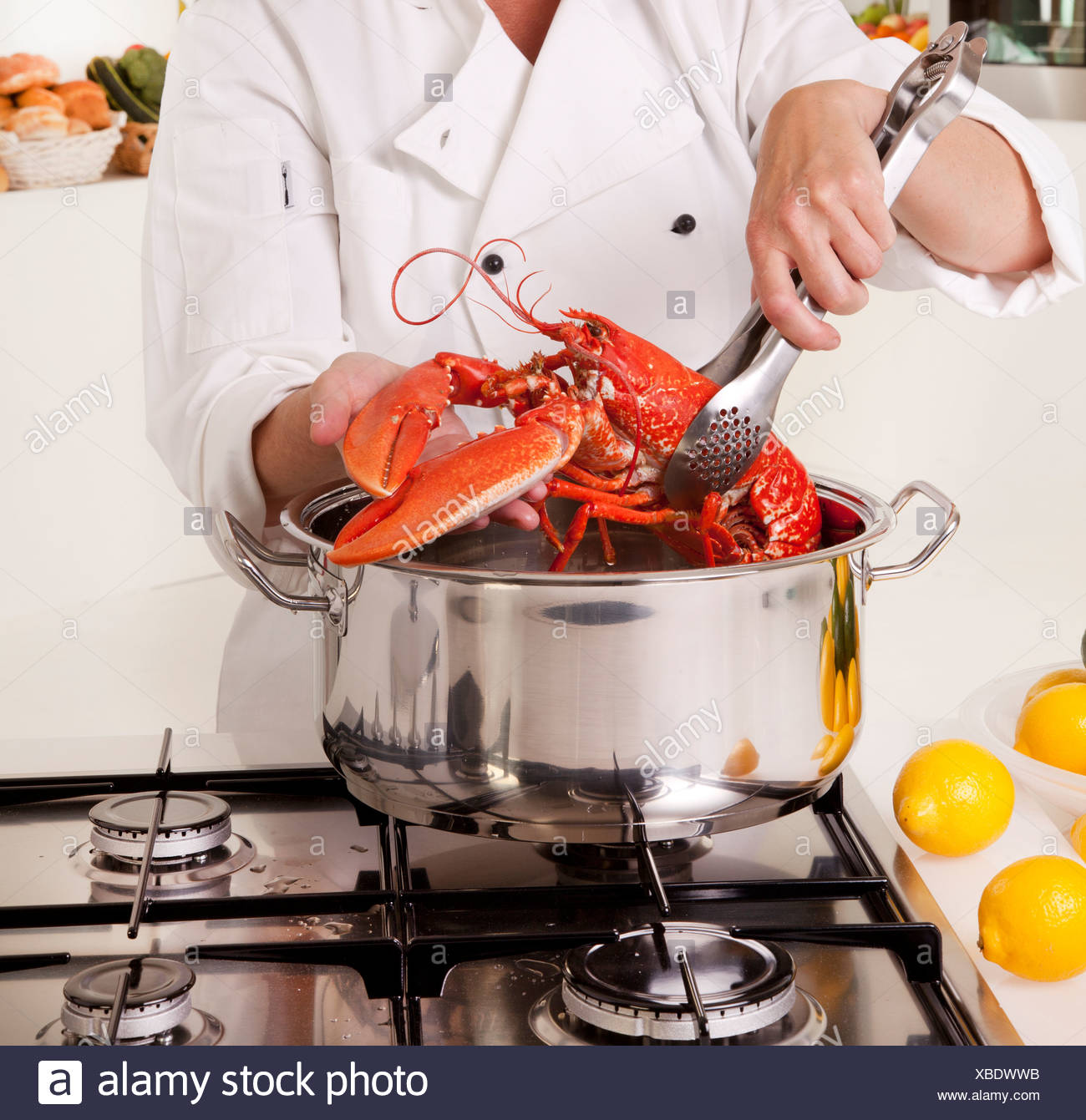 CHEF COOKING LOBSTER - Stock Image