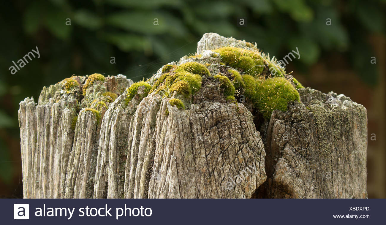 Old Gatepost with Moss - Stock Image