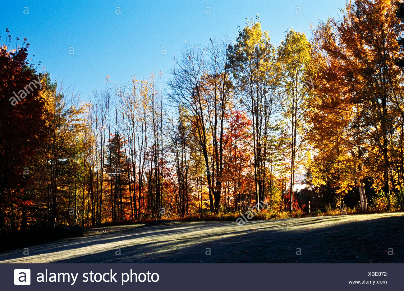 Fall forest - Stock Image