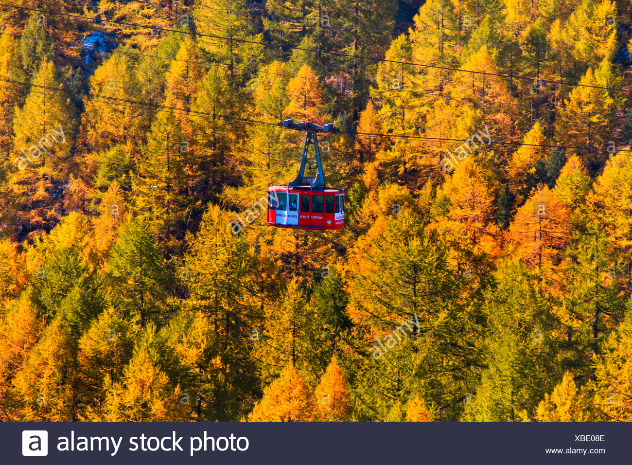 cable car over larches, Switzerland, Valais Stock Photo