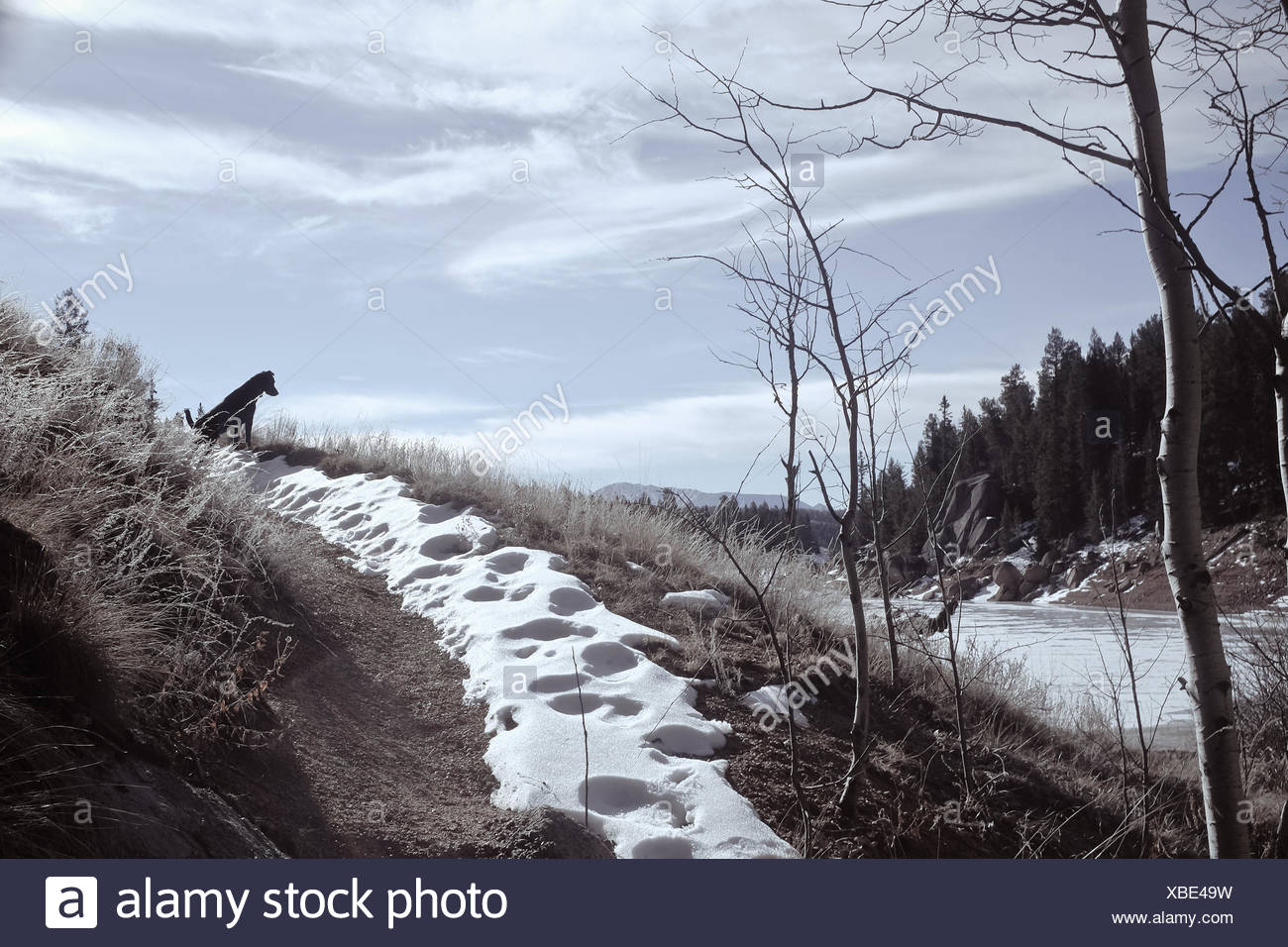 Dog sitting on footpath, Colorado, America, USA - Stock Image