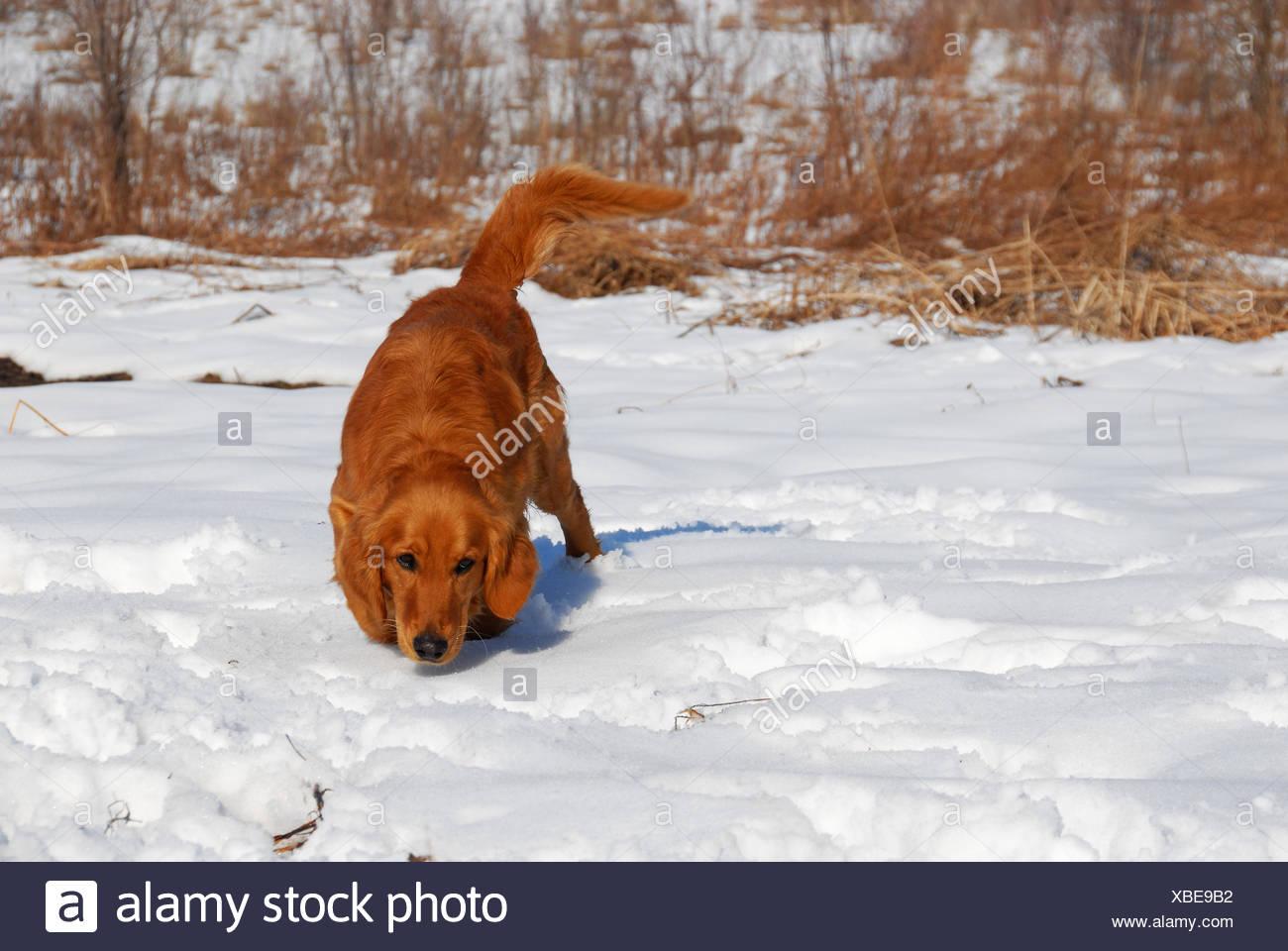 Dog smell - Stock Image