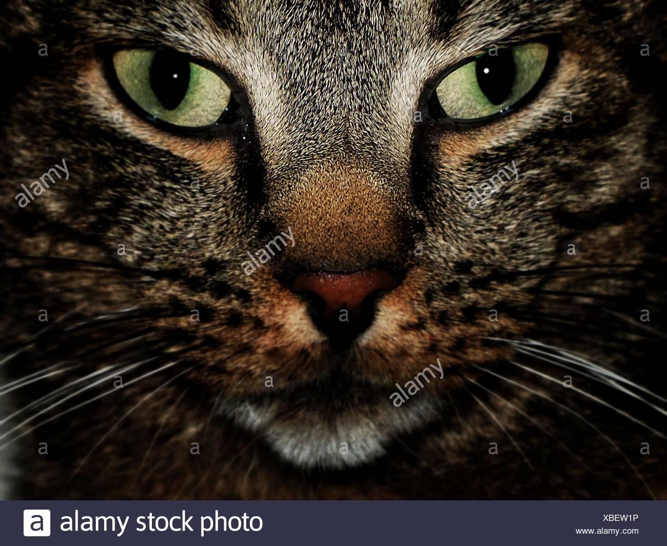 Portrait Of Cat - Stock Image
