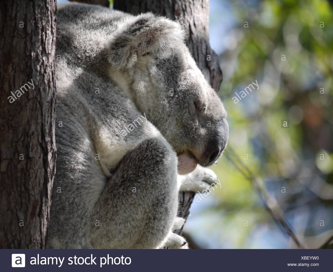 animals, radio silence, quietness, silence, australia, sleep