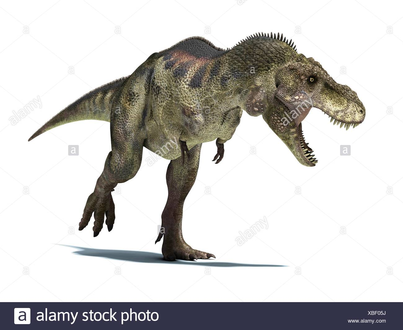 Tyrannosaurus Rex, very well detailed and scientifically correct. isolated on white background with clipping path. - Stock Image