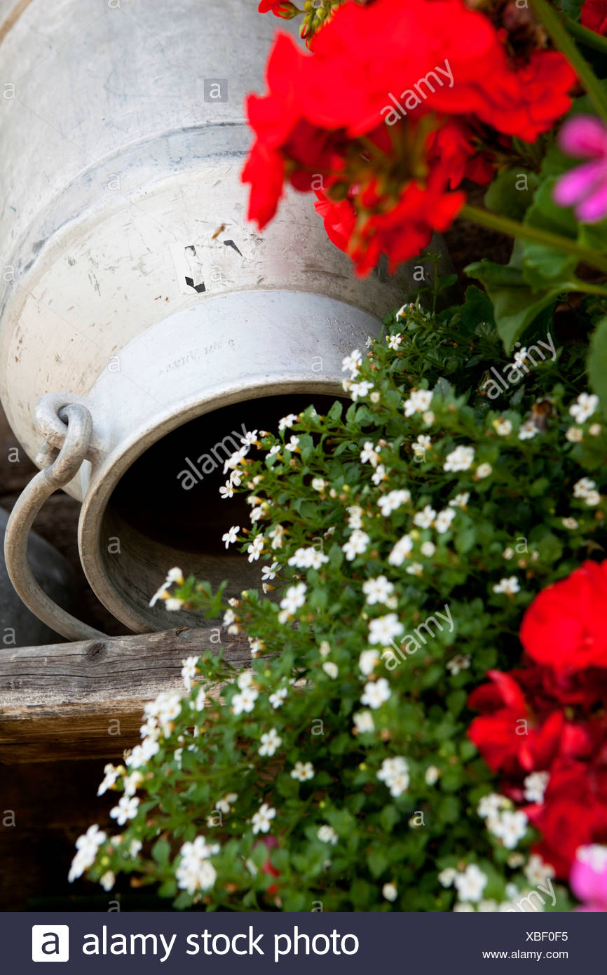 Churn with flowers, Garberl Alm, Eng, Karwendel, Tyrol, Austria Stock Photo