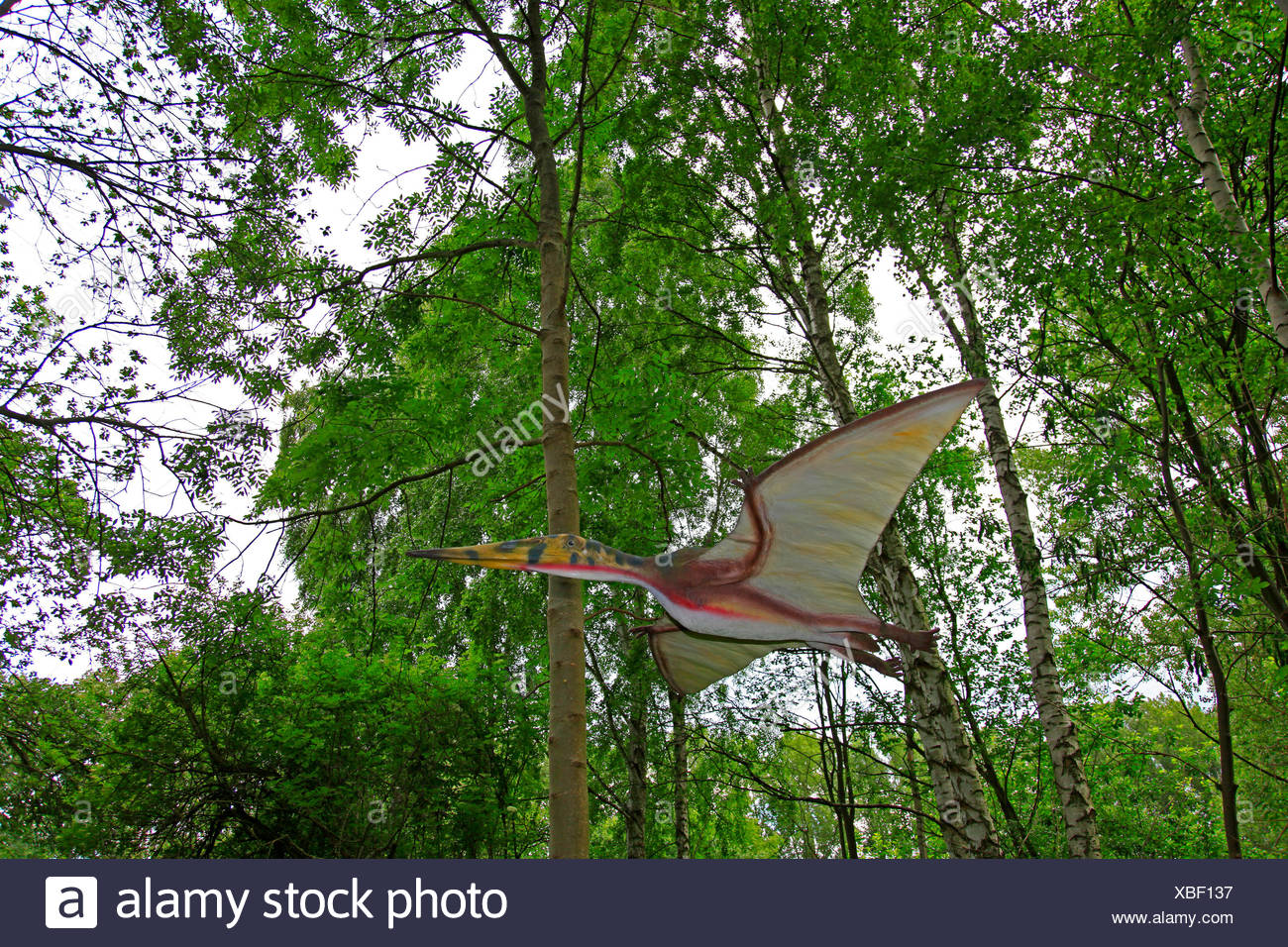 Pterodactylus (Pterodactylus), flying in a forest Stock Photo