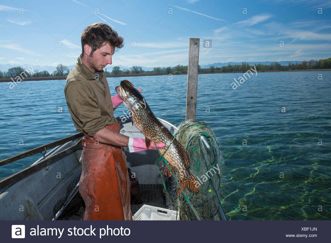 Lake Constance, fisherman, Lake Constance, spring, Claudio Timo Görtz, work, job, occupation, profession, occupations, professio - Stock Image
