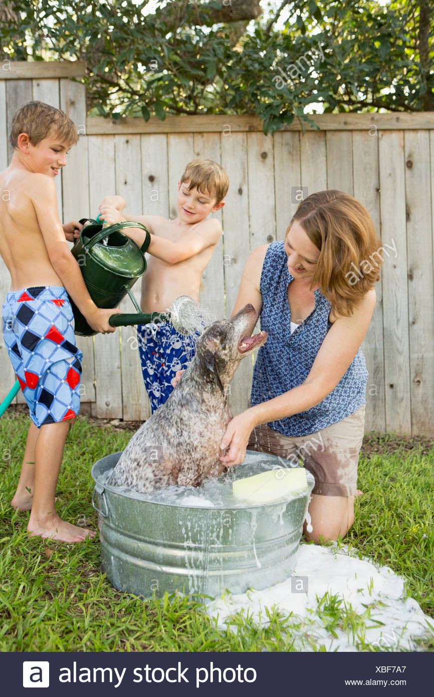A family in their garden, washing a dog in a tub. Stock Photo