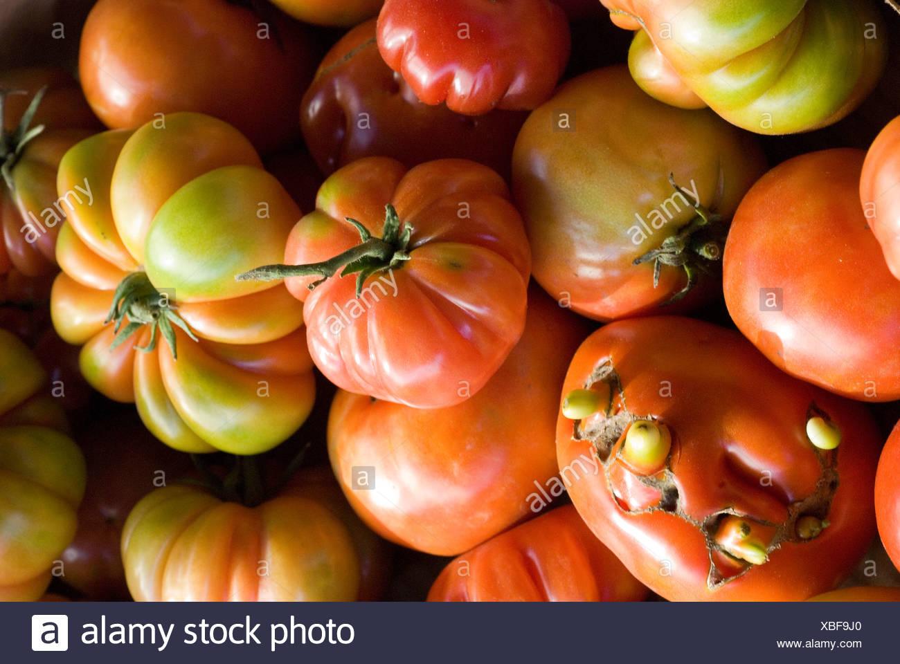 Coeur de boeuf tomatoes - Stock Image