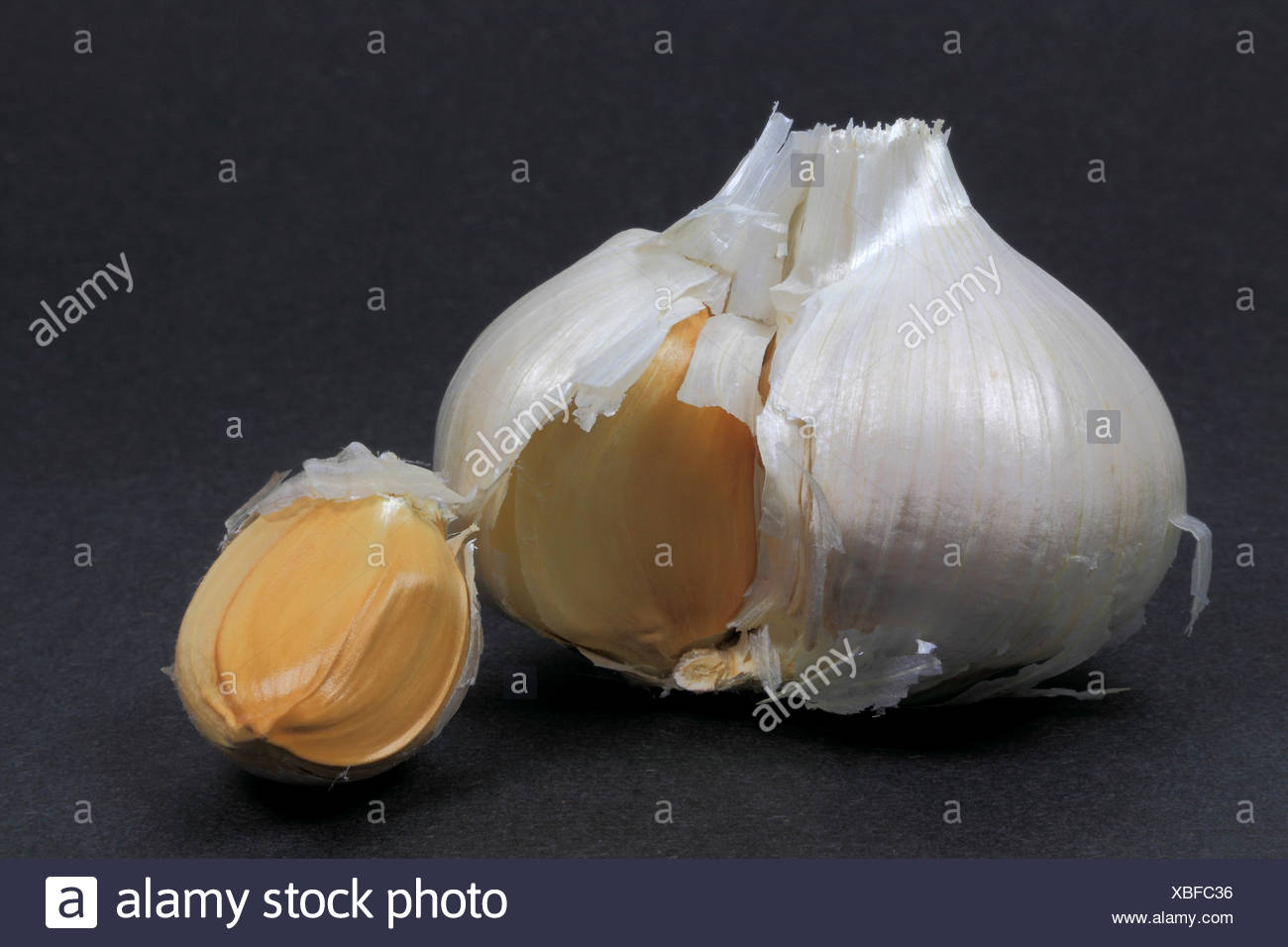 Single Bulb and clove Elephant Garlic. - Stock Image