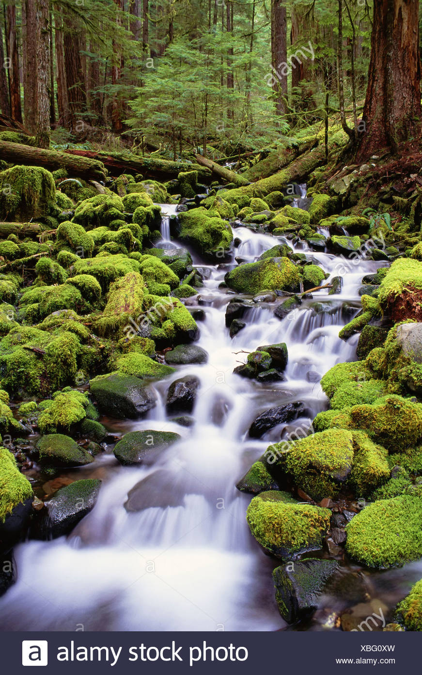 A stream flowing over moss covered rocks in the Olympic National Park in Washington State - Stock Image