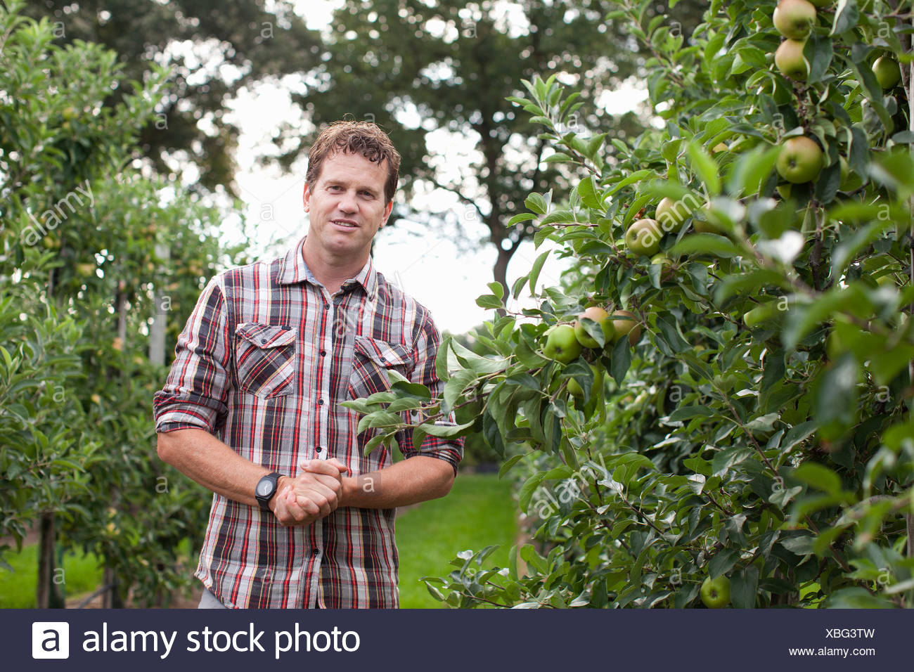 Farmer standing in apple orchard - Stock Image