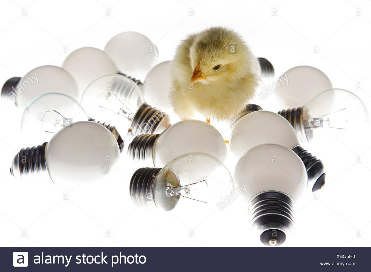 Fellow chick standing among light bulbs - Stock Image