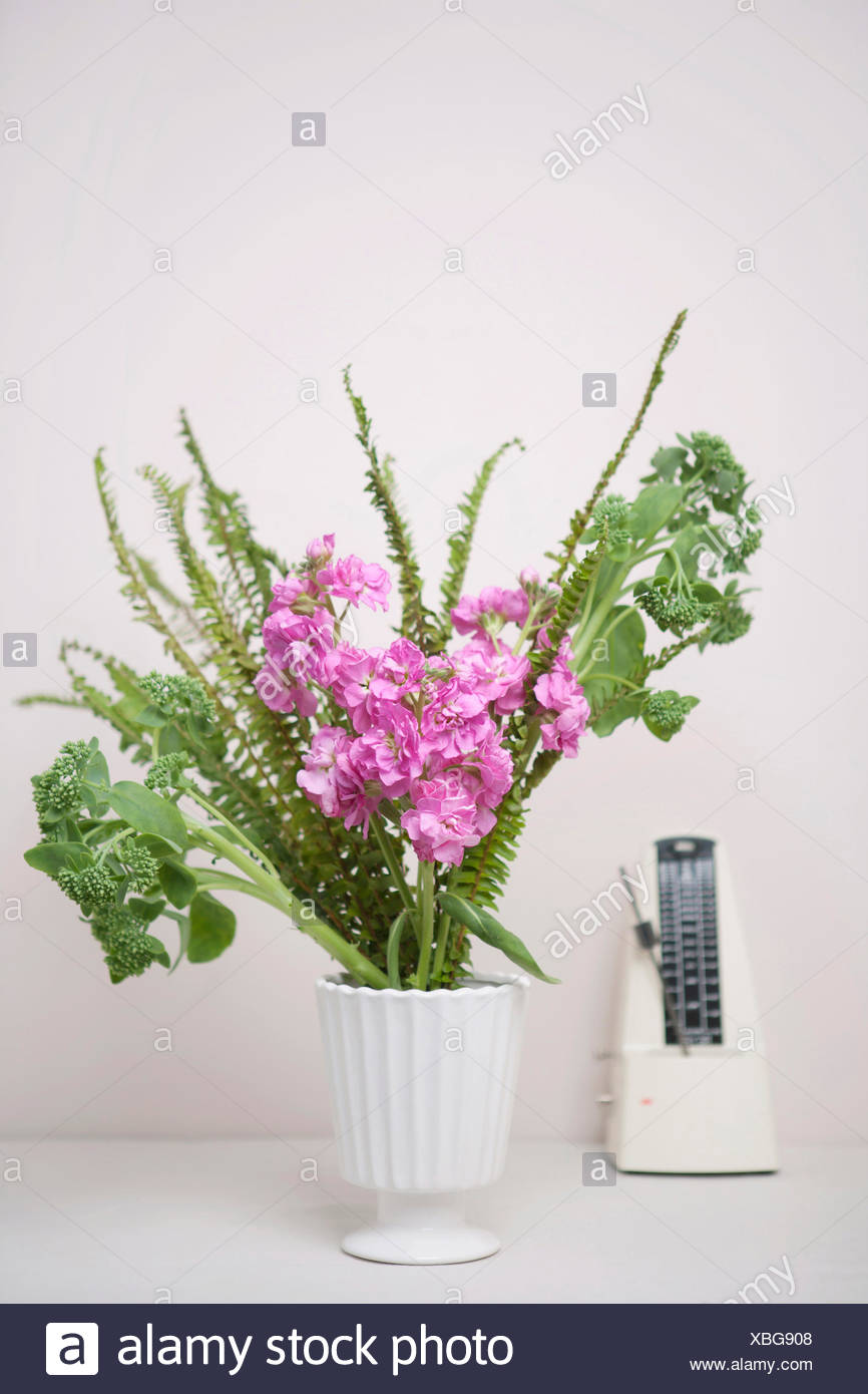 single flower temperate flower - Stock Image