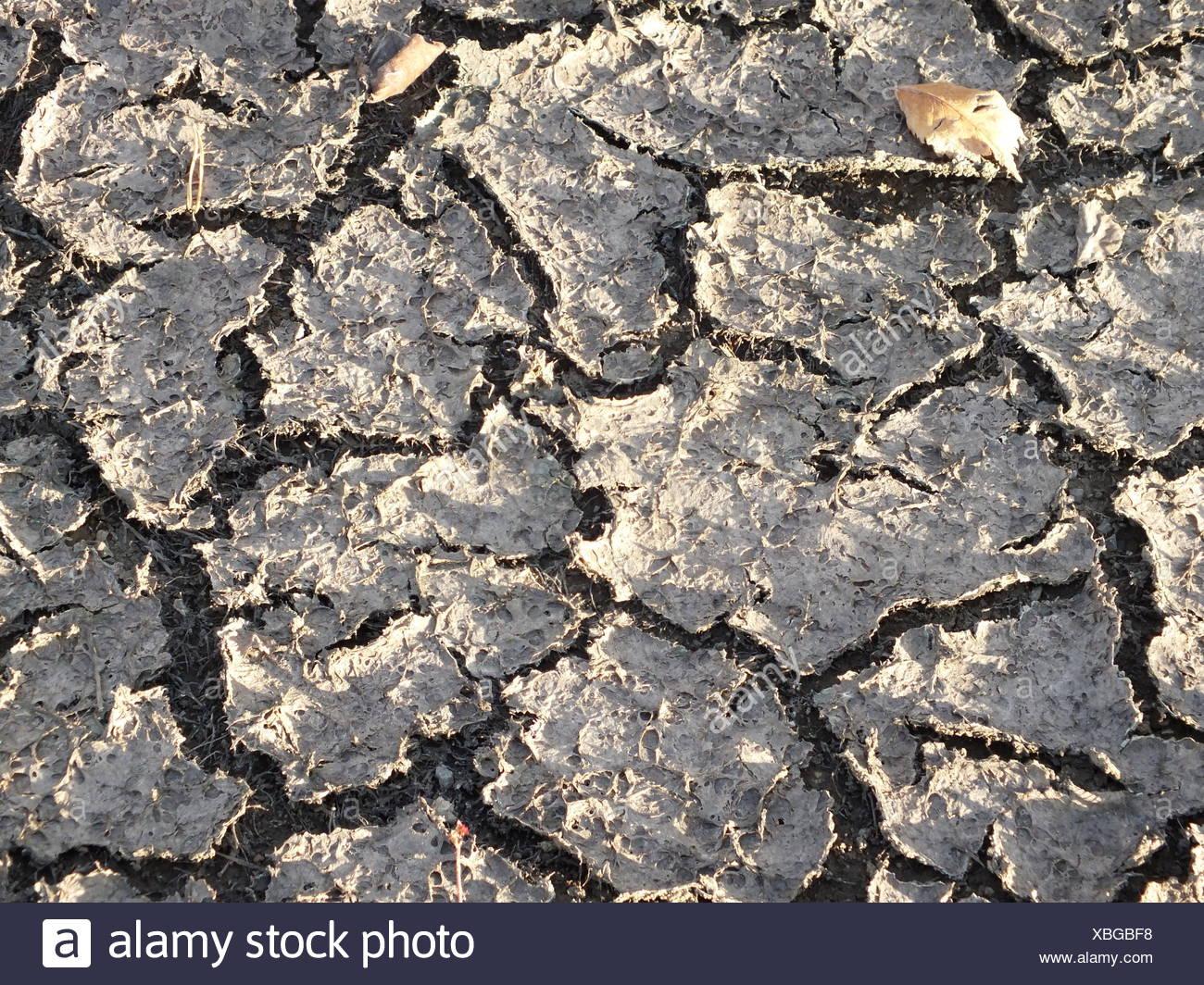 completely dried crust - Stock Image