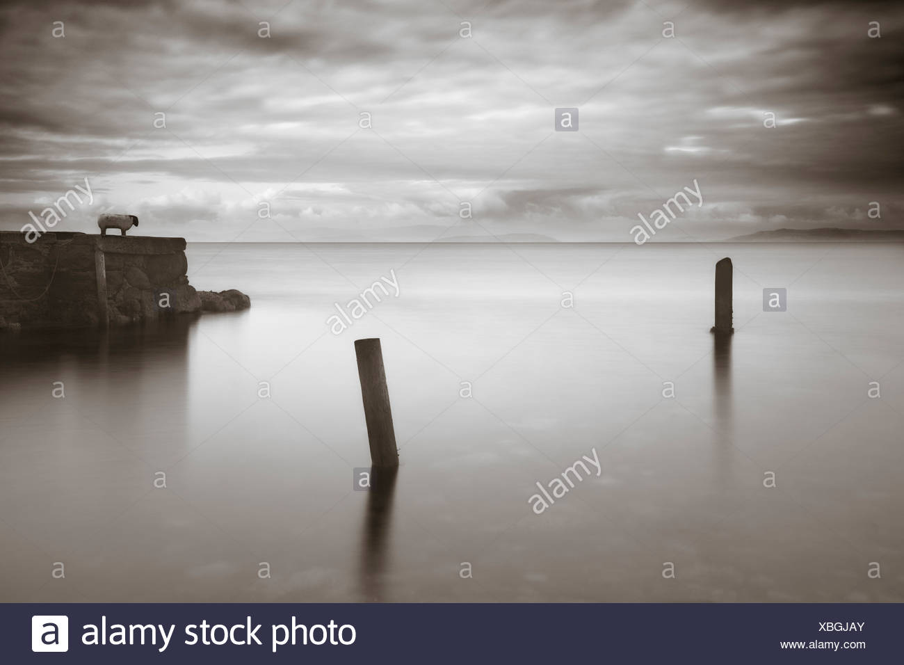 A calm sea with mooring timber and a sheep on headland - Stock Image