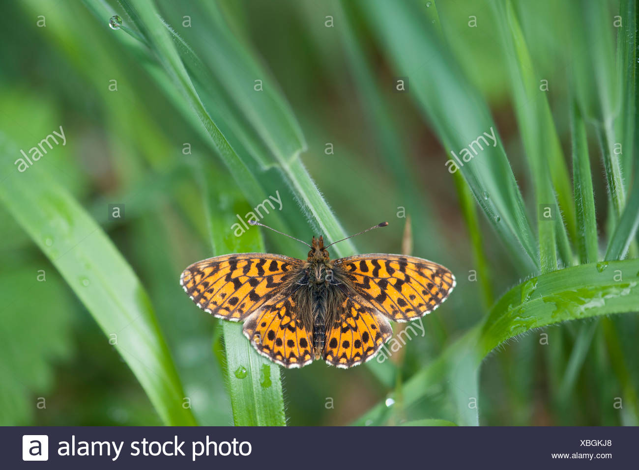 Butterfly flying among leaves - Stock Image