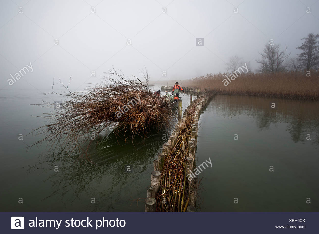 bank protection, lake of Biel, lake, pastures, willows, nature, nature conservation, unemployed person's project, lake, water, r - Stock Image