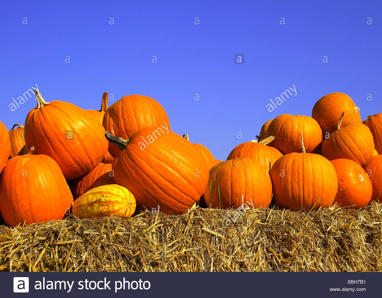 Pumpkins on bales of straw (hay) - Stock Image