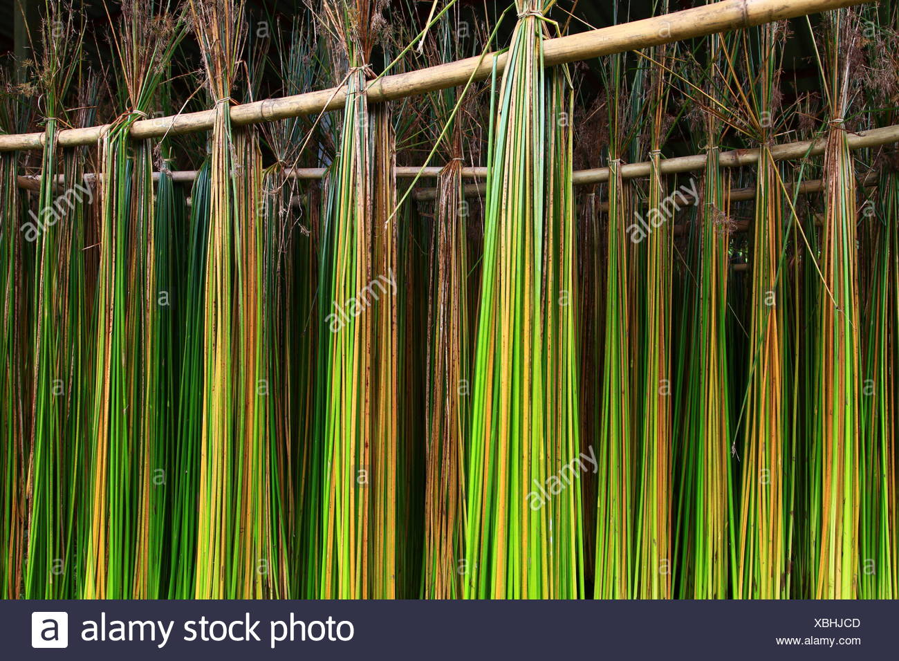 dry reed mats hanging hang up green agriculture farming