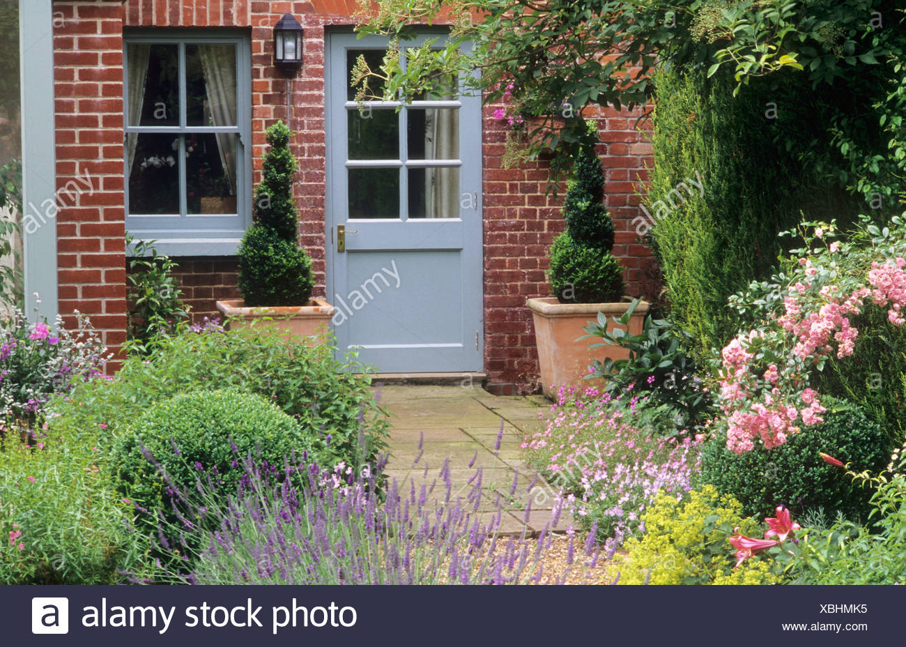 House Blue Painted Back Door Paved Patio Rosa The Fairy Rose Lavender Pair Of Terracotta Pots Planters Containers Topiary Stock Photo Alamy