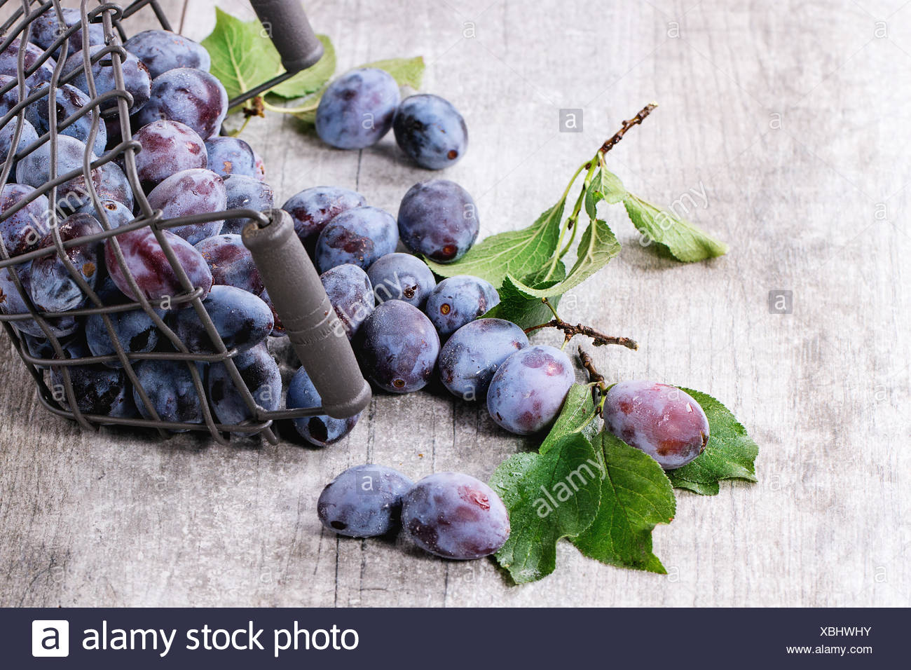 Ripe purple plums with leaves in inverted metal decorative basket over gray wooden background. - Stock Image