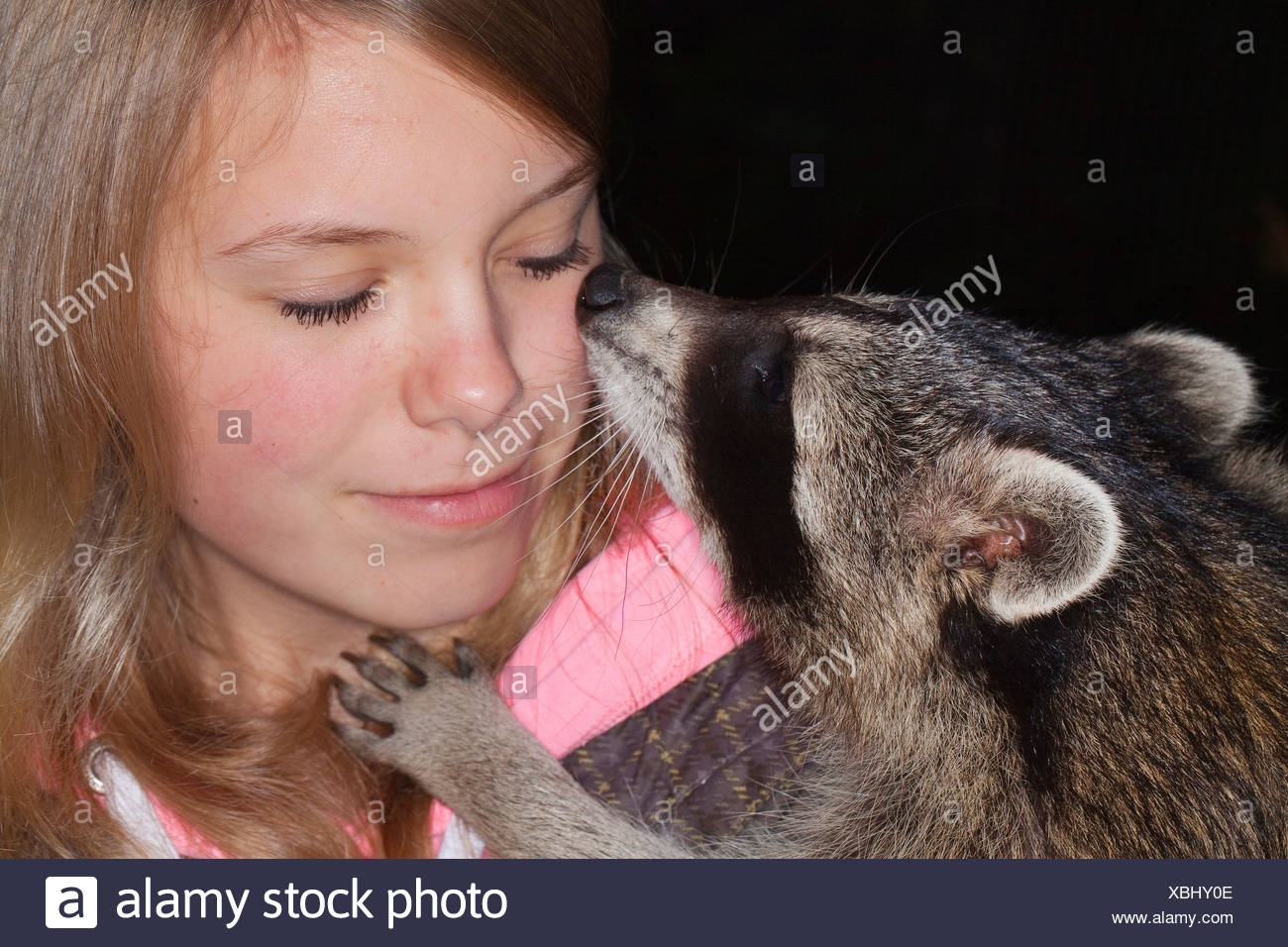 common raccoon (Procyon lotor), gentle young animal playing and smooching with a girl, Germany - Stock Image