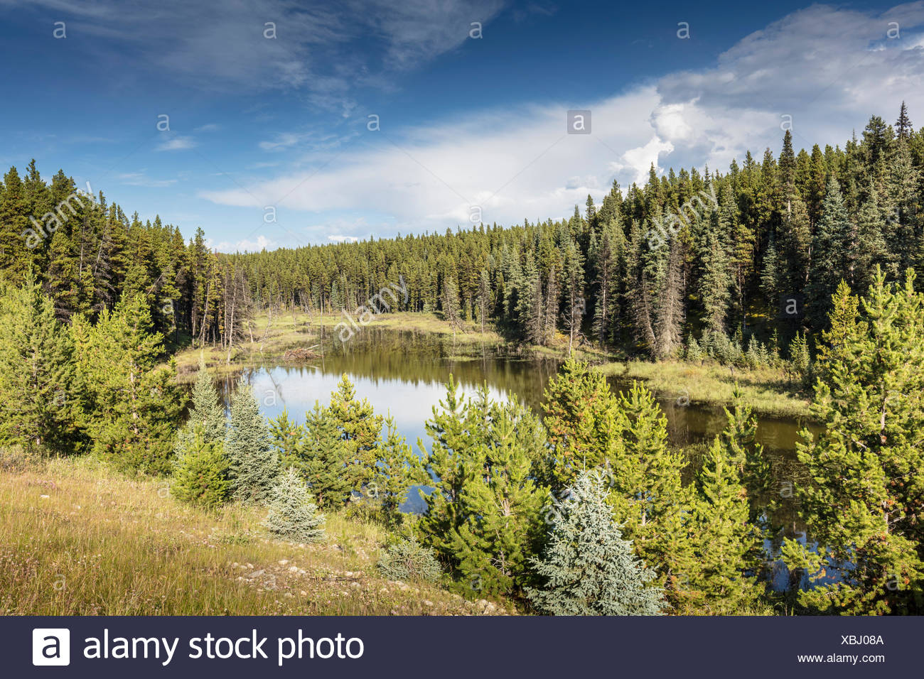 Henderson Creek on the Big Horn Route in Alberta, Canada - Stock Image