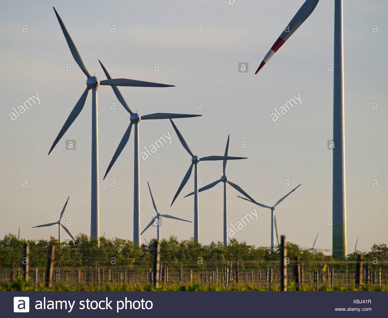 windpark Parndorf, Austria, wind wheels - Stock Image