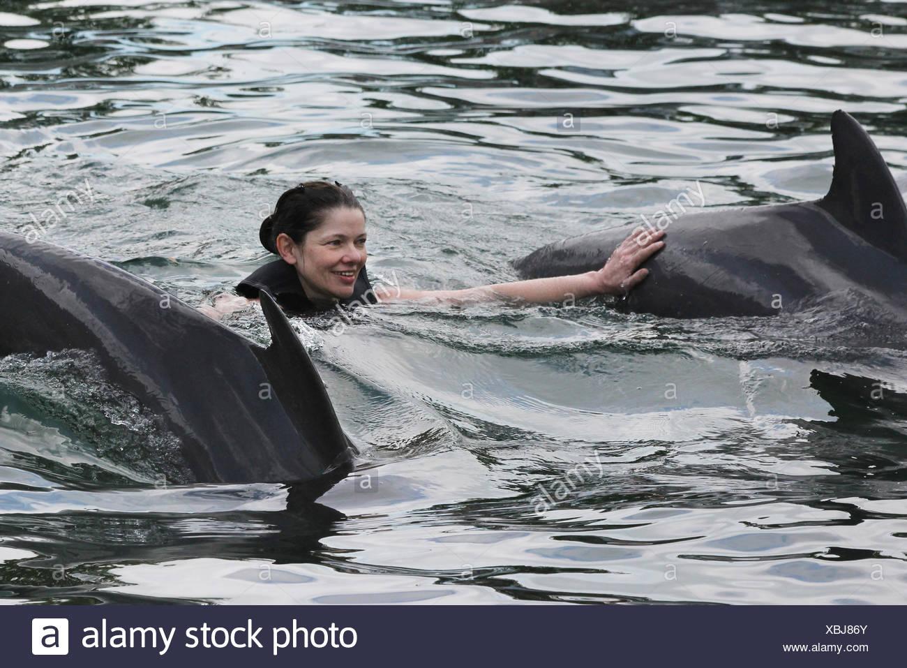 Dolphin Swim Stock Photo