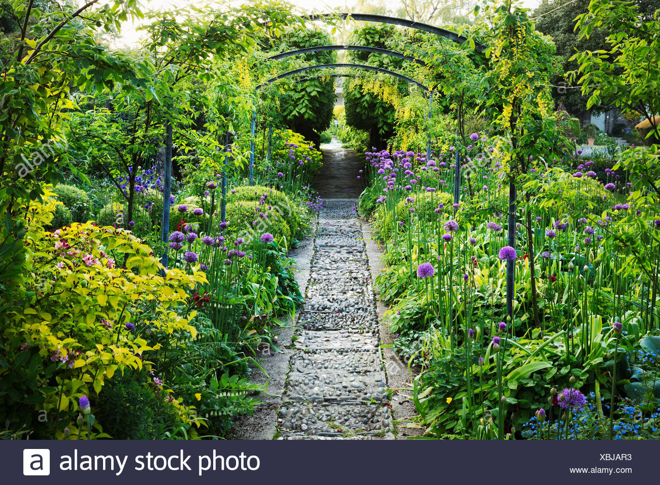 Beau Mature Plants And Shrubs In An English Garden, Pathway And Pergola.  Cotswold Stone, Purple Aliums Flowering. Glouchestershire Hotel Gardens