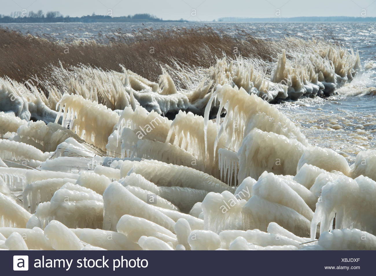 By icecold stormy weather, the reed at the Lauwersmeer changed into strange ice landscapes. - Stock Image
