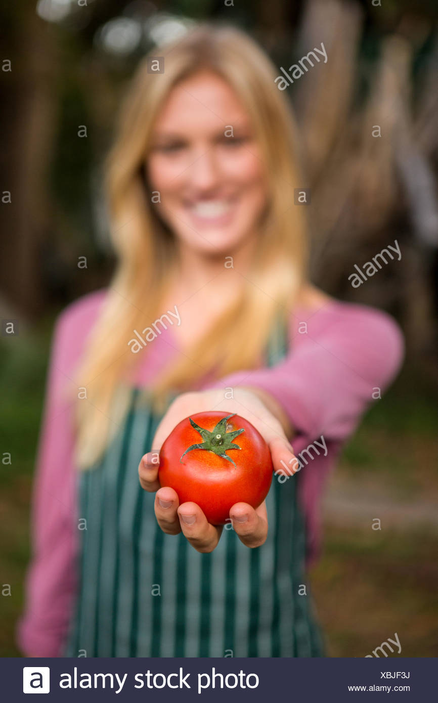 Close-up of garderner offering tomato at garden - Stock Image