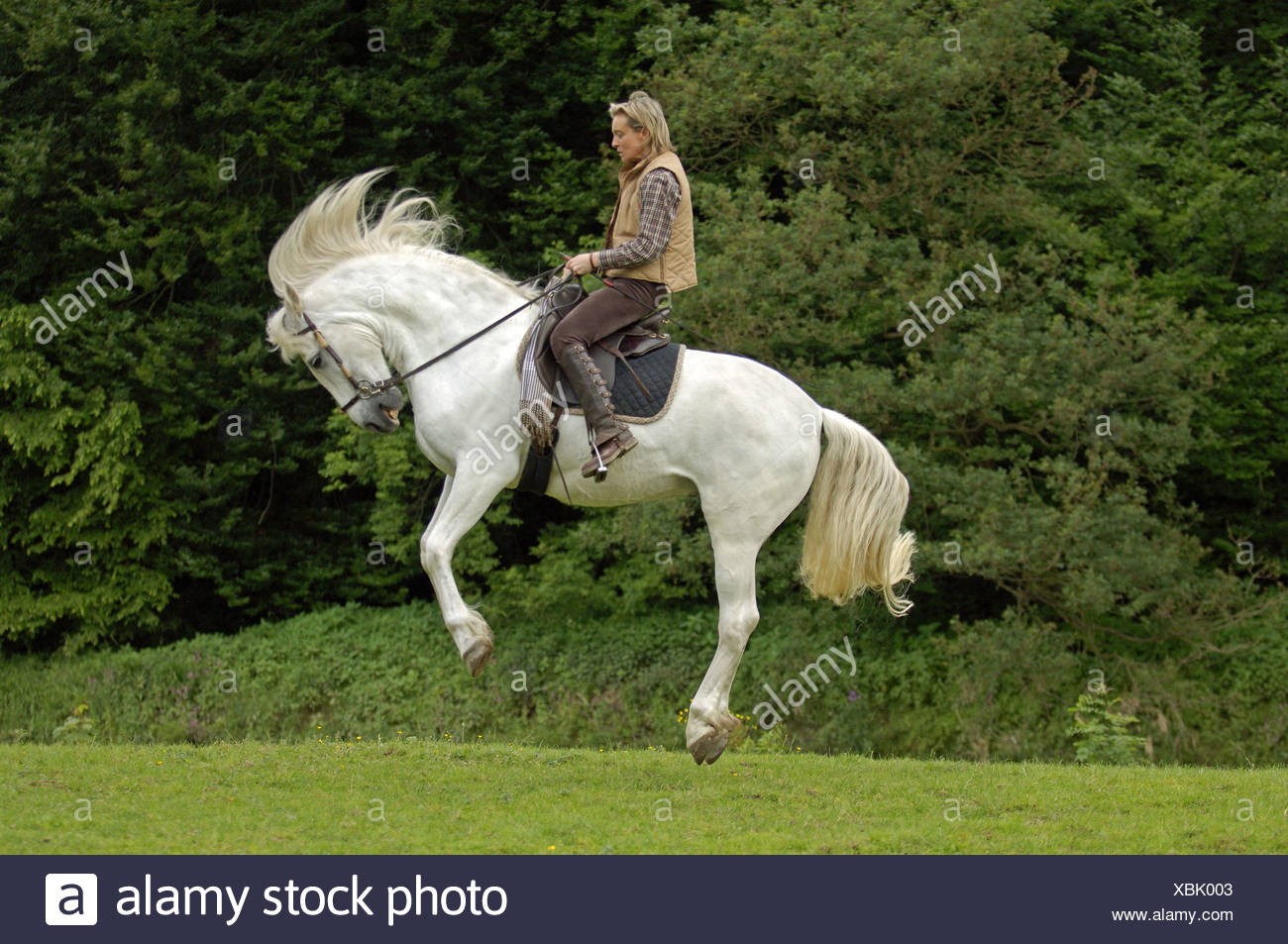 horse - bitless bridle Stock Photo: 282544195 - Alamy