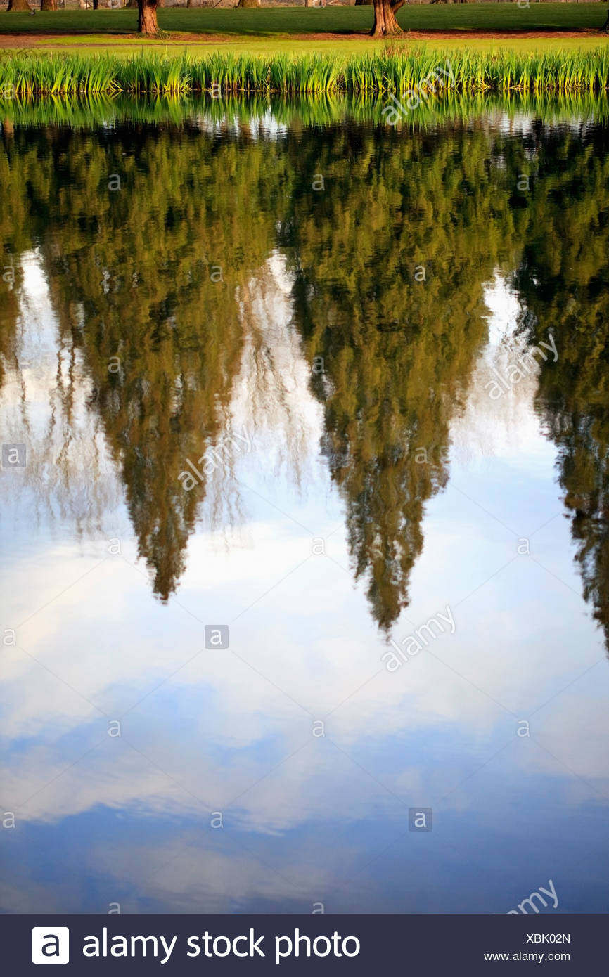 Oregon, United States Of America; Tall Trees And The Sky Reflected In The Water - Stock Image