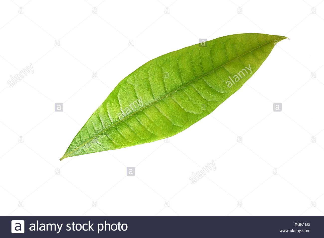 Green sheet - Stock Image