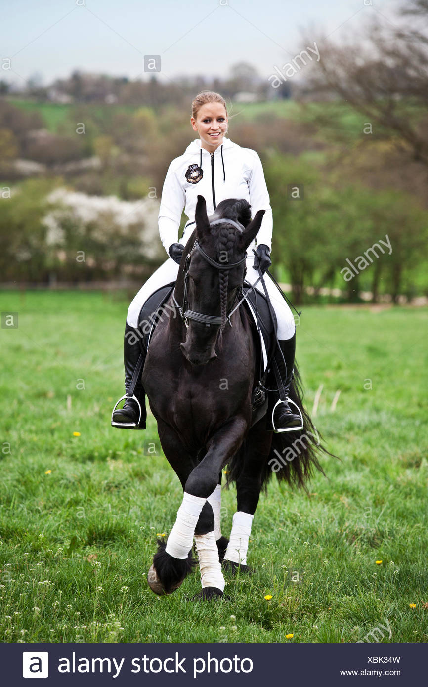 Friesian or Frisian horse, stallion with a female rider on horseback on a meadow, classical dressage, half pass - Stock Image