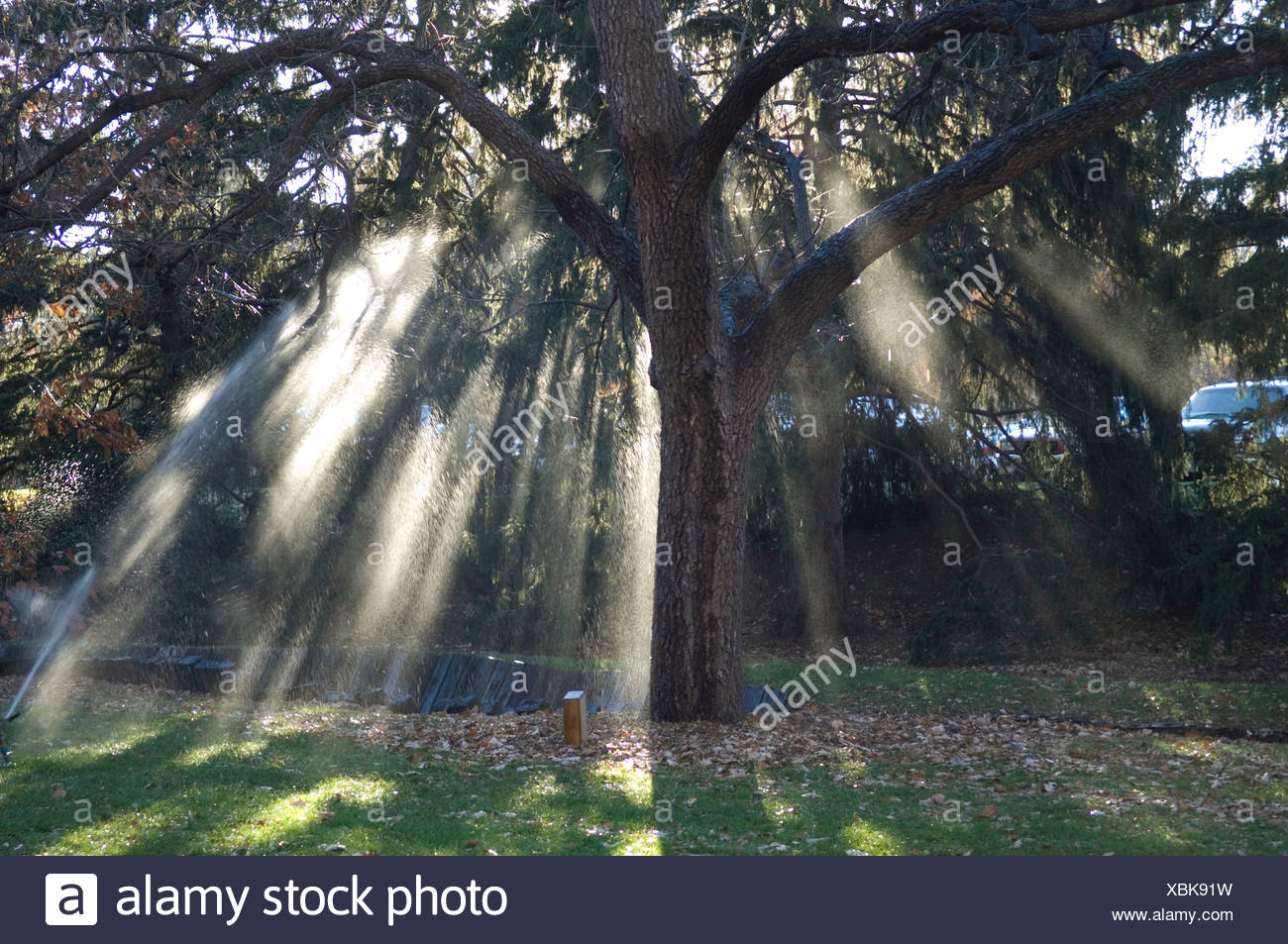 The sun's rays shine through a trees branches at Maxwell Arboretum. - Stock Image