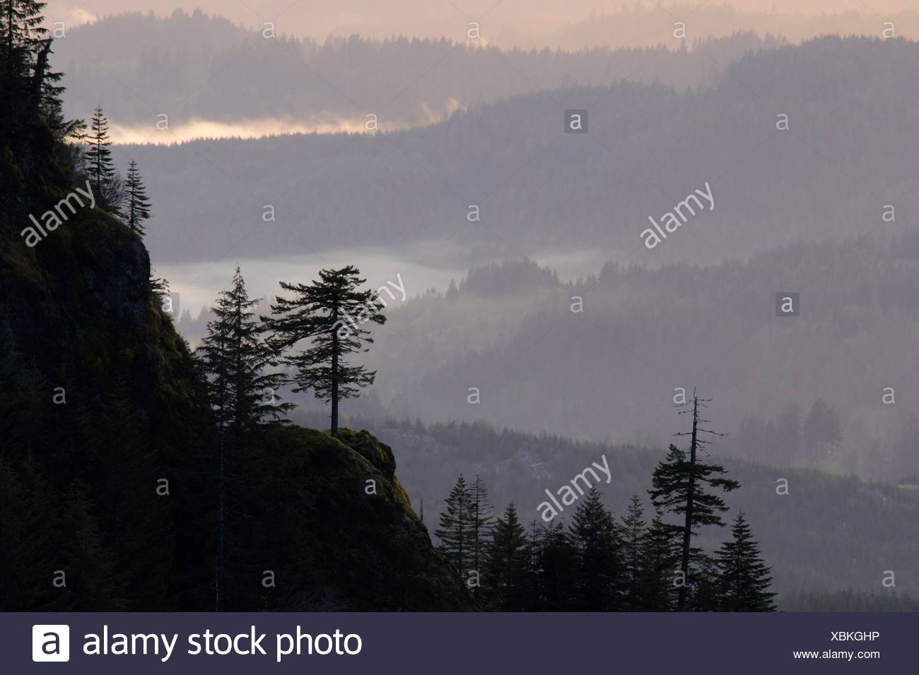 View from summit viewpoint, Saddle Mountain State Park, Oregon. - Stock Image
