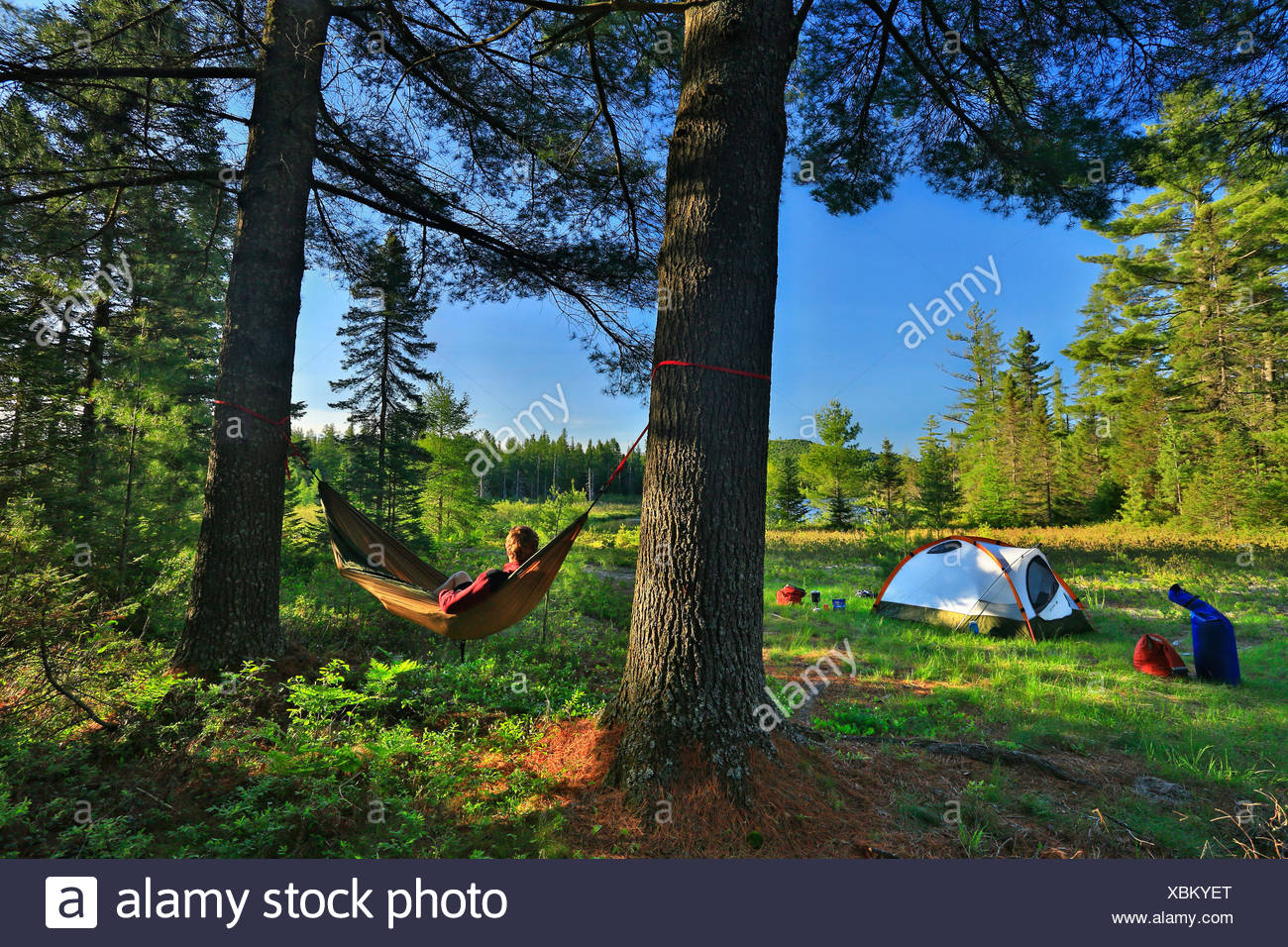 Camper Lounges On A Hammock Between Two Trees At Saint Regis River, New York - Stock Image