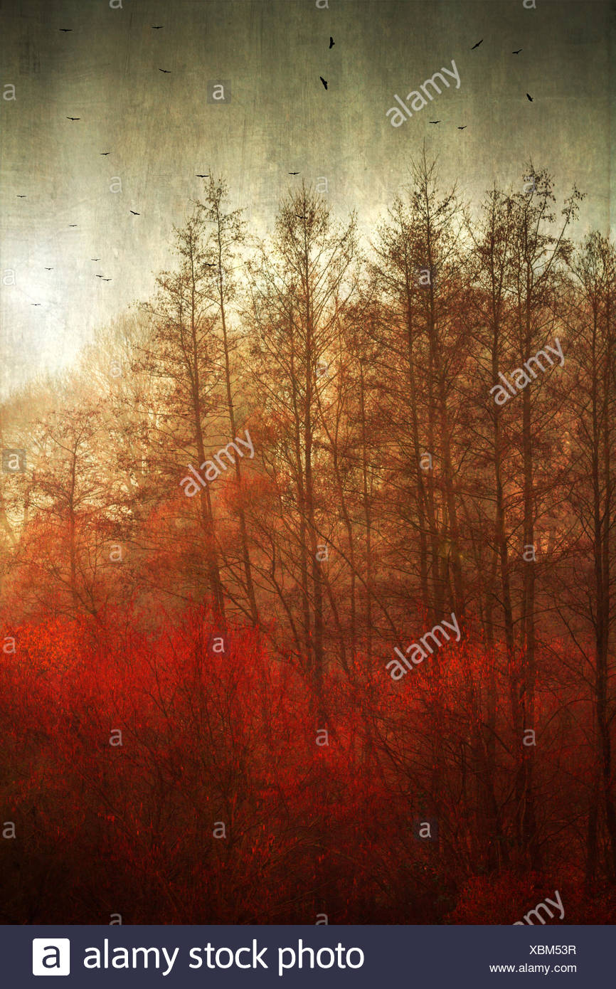 Germany, near Wuppertal, Broad-leaved trees in autumn - Stock Image